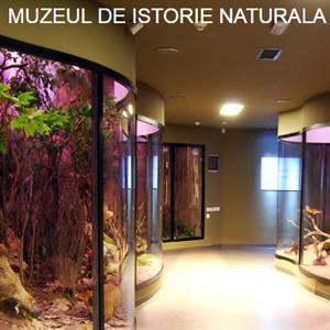 muzeul-de-istorie-naturala-rosen-villa-sibiu